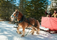 Horse drawn sleigh, Banff National Park