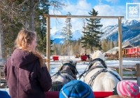 Horse drawn sleigh ride, Banff