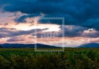 11041613-vineyard