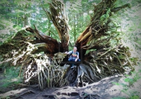 Tree roots, Cathedral Grove, Vancouver Island