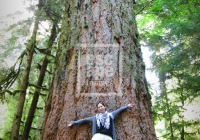 Now that's a big tree, Cathedral Grove, Vancouver Island
