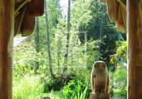 Tofino Botanical Gardens, Vancouver Island