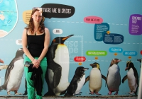 Measuring up to the penguins at Vancouver Aquarium