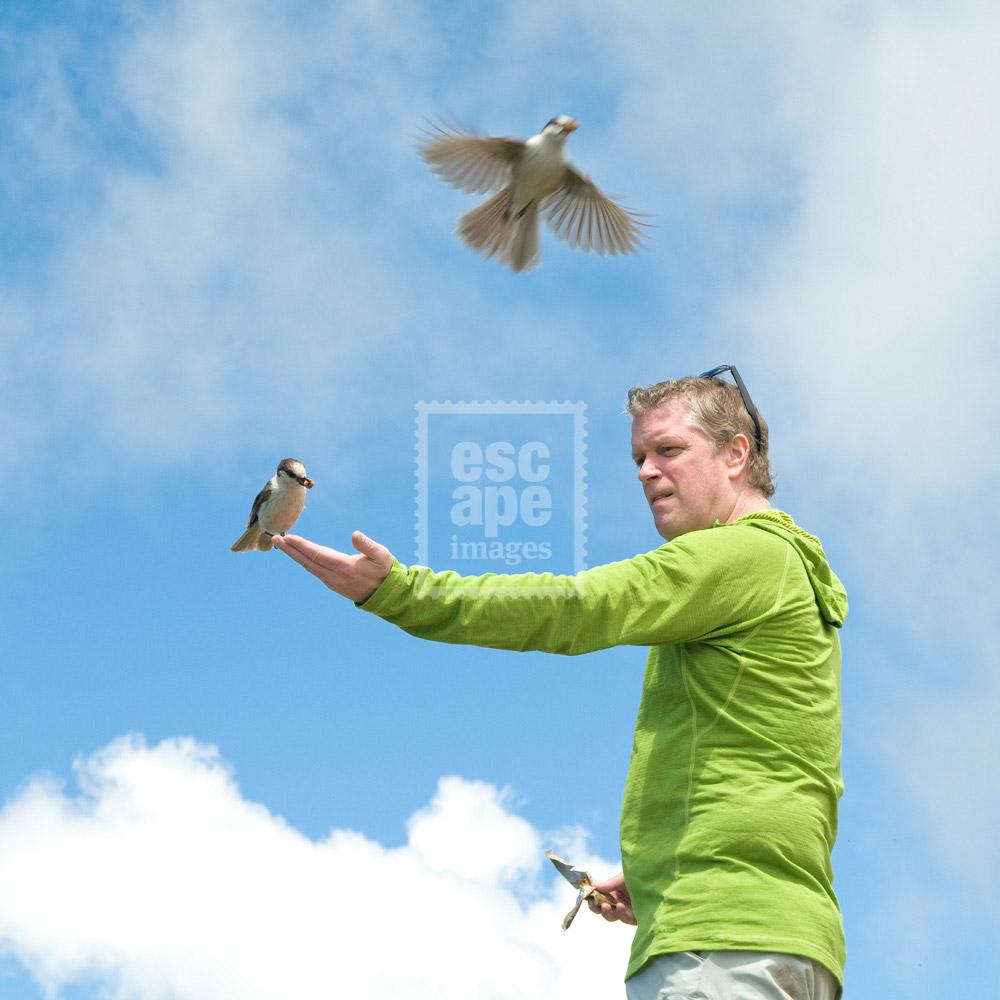 Man feeding Grey Jays