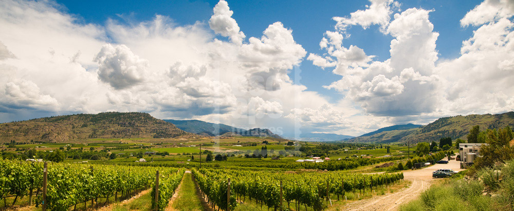 The Okanagan, true wine country