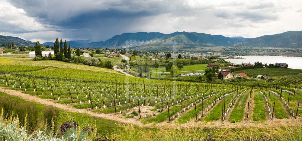 Poplar Grove Winery