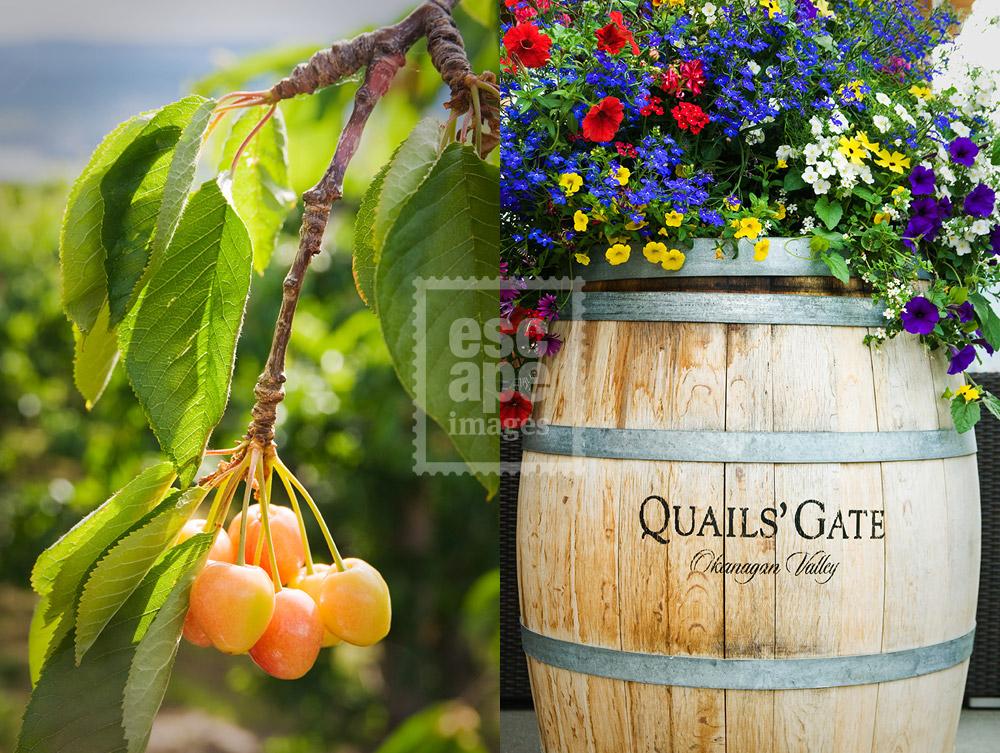 Quails Gate